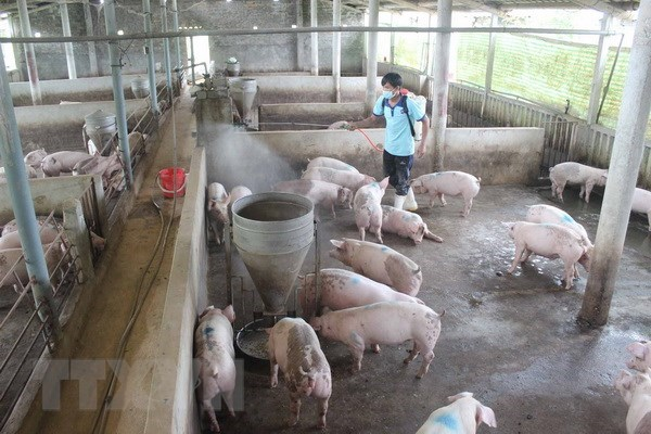 Publication du systeme d'information sur les maladies animales en ligne hinh anh 1