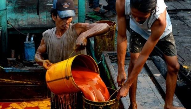 Indonesie : la production d'huile de palme brute atteindrait 40-42 milliards de tonnes cette annee hinh anh 1