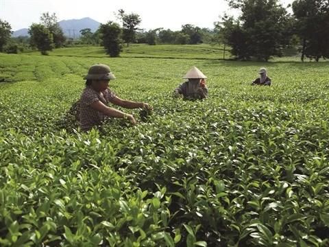 Phu Tho s'attele a la reduction durable de la pauvrete hinh anh 1