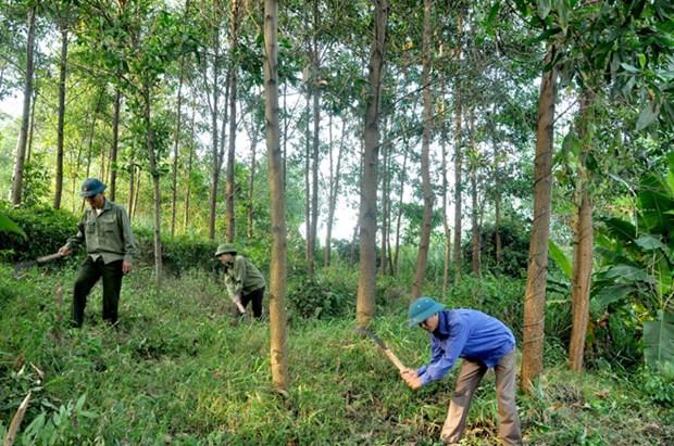 Le pays plante 130.858 ha de foret de production hinh anh 1