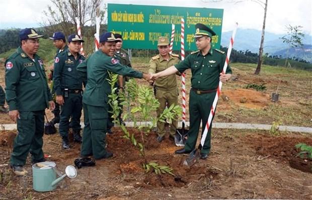 Plantation d'arbres au carrefour des frontieres Vietnam - Laos - Cambodge hinh anh 1