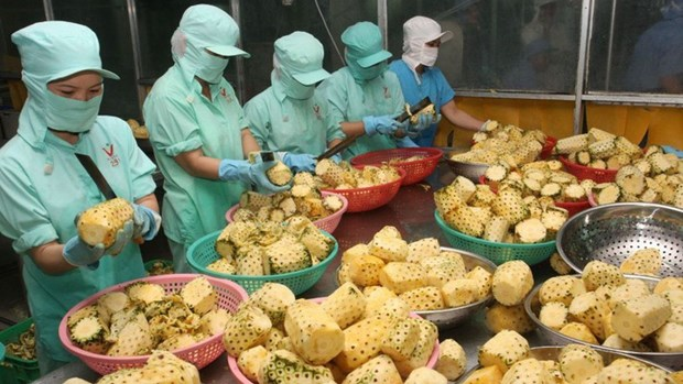 Exportations de produits agricoles: le Vietnam au 2e rang en Asie du Sud-Est, 15e dans le monde hinh anh 1