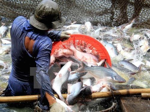 Les Etats-Unis diminuent les taxes antidumping sur les poissons pangasius du Vietnam hinh anh 1