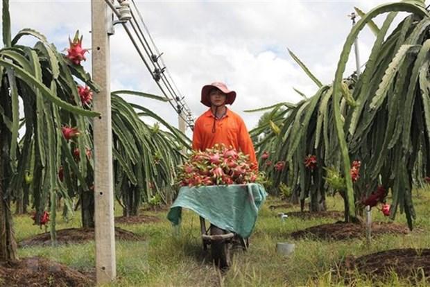 Colloque sur la promotion de la consommation des fruits du dragon de Binh Thuan en Inde hinh anh 1