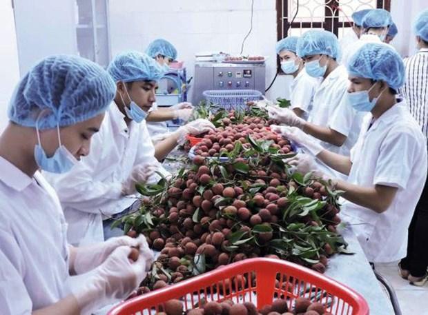 Exportations de fruits et legumes en forte hausse hinh anh 1