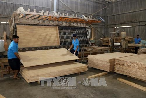 Les exportations de produits sylvicoles atteignent 6,64 milliards de dollars en neuf mois hinh anh 1