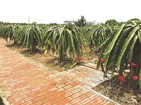 Viet Dan, commune exemplaire dans l'edification de la Nouvelle ruralite hinh anh 1