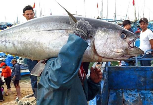 Developpement des ressources humaines au service de l'economie maritime hinh anh 1