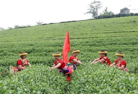 Faire naitre la marque du the vert de Phu Tho hinh anh 2