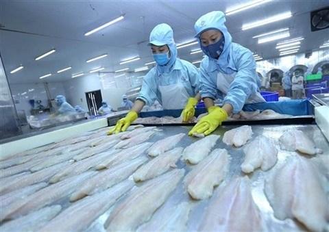Exportations des poissons tra aux Etats-Unis en forte hausse au 3e trimestre hinh anh 1