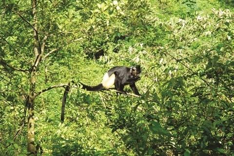 Parc national de Cuc Phuong, la reserve naturelle la plus importante du Vietnam hinh anh 2