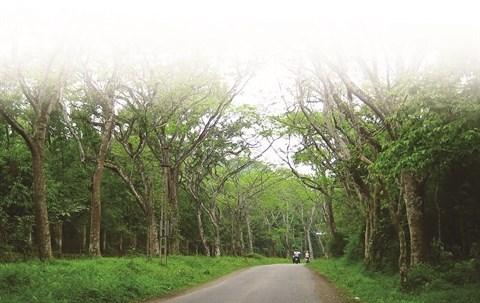 Parc national de Cuc Phuong, la reserve naturelle la plus importante du Vietnam hinh anh 1