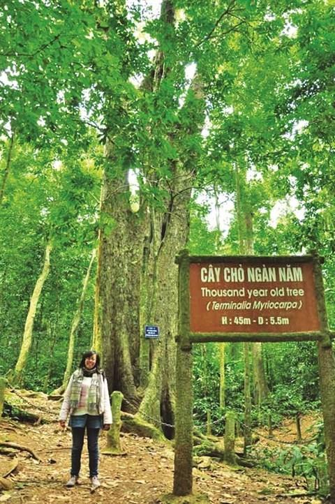 Parc national de Cuc Phuong, la reserve naturelle la plus importante du Vietnam hinh anh 3