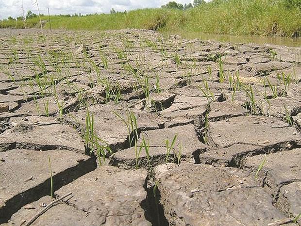 Le projet NAMA contribue a adapter au changement climatique hinh anh 1