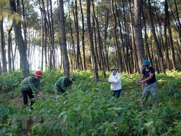 Vietnam et Laos : cooperation accrue dans l'application de la legislation forestiere hinh anh 1