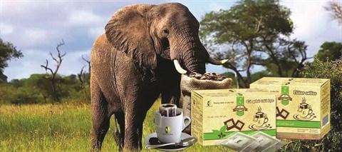 Cafe d'elephant du Tay Nguyen, un label de poids hinh anh 1