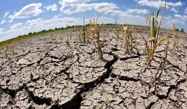 Forum de Hanoi sur l'amelioration de la resilience au changement climatique hinh anh 1