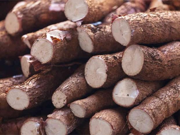 Manioc : les exportations vers la R. de Coree ont fortement augmente hinh anh 1