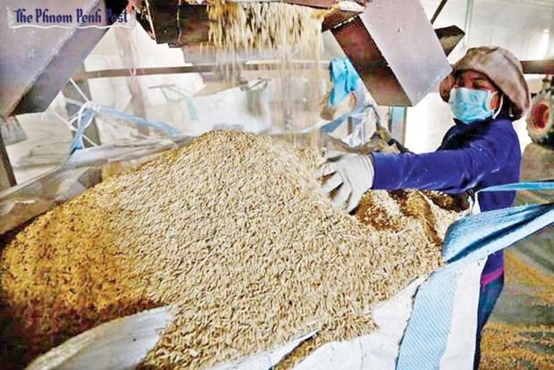 Le Cambodge voit ses exportations de riz diminuer ces 11 derniers mois hinh anh 1