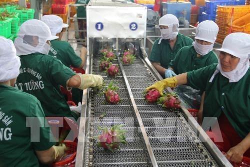 Tien Giang : le chiffre d'affaires a l'exportation atteint 2,7 milliards de dollars hinh anh 1