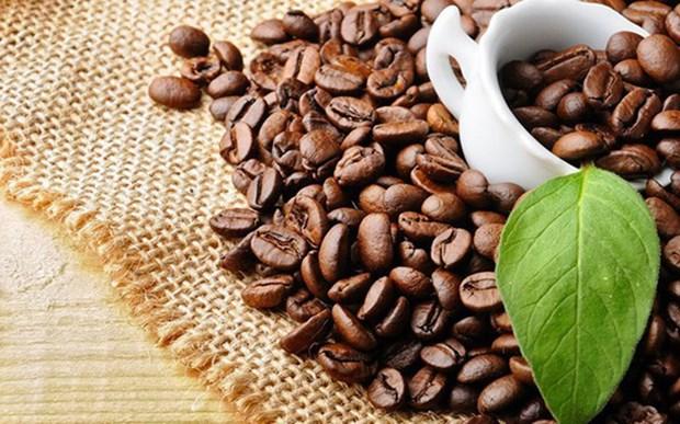 Plus de 3,5 milliards de dollars d`exportations de cafe vietnamien en 2018 hinh anh 1