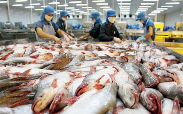 Le Vietnam, plus gros exportateur mondial de pangasius hinh anh 1