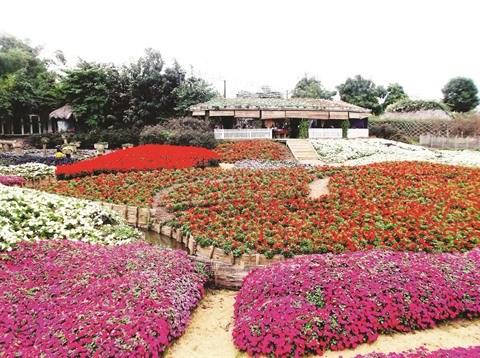 Le parc floral de Ho Tay, une destination prisee a Hanoi hinh anh 1