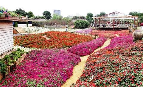 Le parc floral de Ho Tay, une destination prisee a Hanoi hinh anh 3
