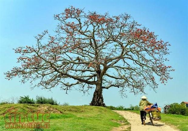 Six arbres precieux reconnus comme patrimoine national hinh anh 1