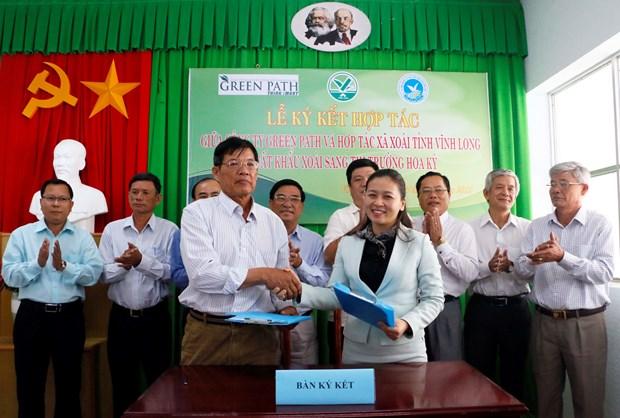 Vinh Long : Cooperation dans l'exportation de mangues vers le marche americain hinh anh 1