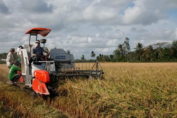 De nombreux contrats d'exportation de riz ont ete signes hinh anh 1