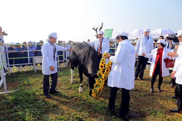 TH possedera 137.000 vaches laitieres d'ici fin 2020 hinh anh 1
