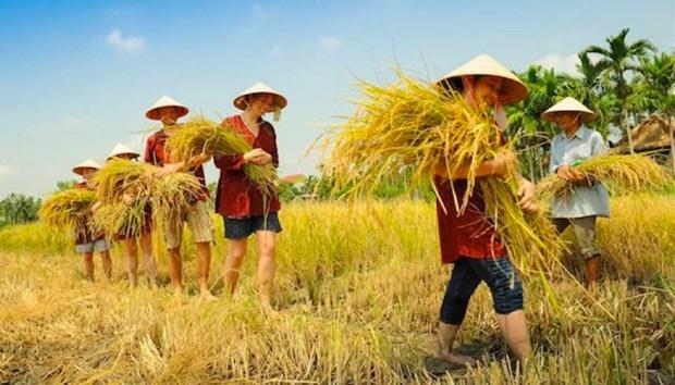 Ho Chi Minh-Ville : developper l'agrotourisme dans les districts periurbains hinh anh 1