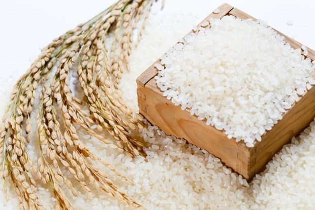 Hanoi exportera du riz Japonica hinh anh 1