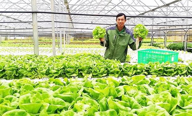 Exportation de legumes hydroponiques de Da Lat vers la Republique de Coree hinh anh 1