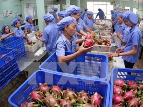 Exportations de fruits et legumes en hausse de 3,9% au premier semestre hinh anh 1