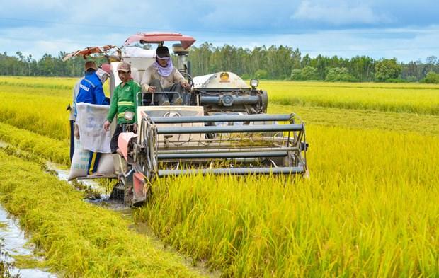 Mesures pour attirer plus d'investissements dans l'agriculture hinh anh 1