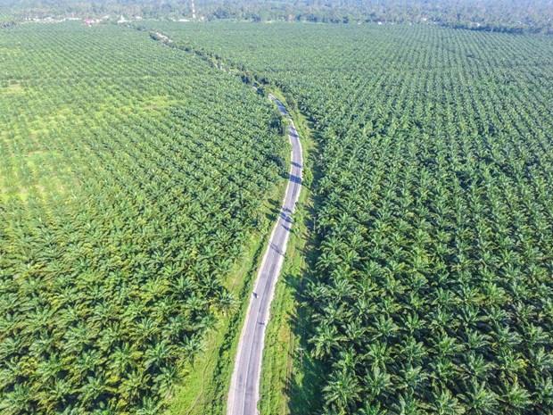L'Indonesie demande a certains supermarches d'eliminer les produits «sans huile de palme» hinh anh 1
