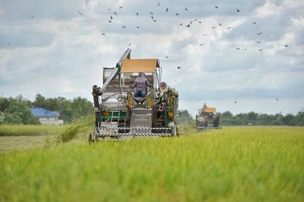 Thailande : approbation d'un budget pour garantir les prix du riz et de l'huile de palme hinh anh 1