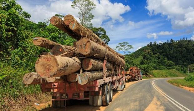 La Malaisie s'attaque a l'exploitation forestiere et miniere illegale et a la contrebande hinh anh 1