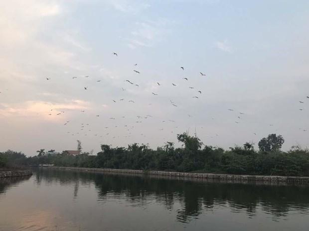 Hai Duong : mesures pour proteger l'ile aux aigrettes de Chi Lang Nam hinh anh 1