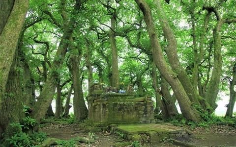 """Patrimoine vegetal"" en terre sainte a Phu Tho hinh anh 1"