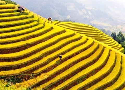 Nord-Ouest: La belle saison de Lao Cai arrive hinh anh 1