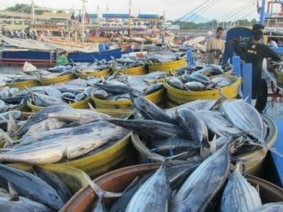 Les Philippines augmentent leurs achats de thon vietnamien hinh anh 1