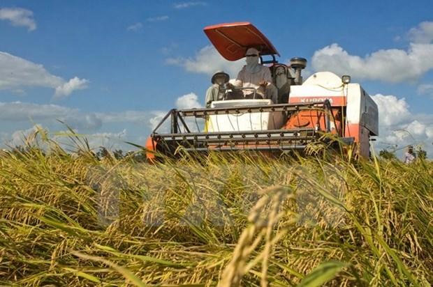 Le Vietnam octroi au Laos 300 tonnes de semences de riz hinh anh 1