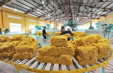Deux tiers du volume de caoutchouc du Vietnam exportes en Chine hinh anh 1