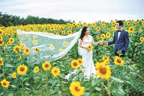 Bac Giang: un champ de fleurs de tournesols pour les fans de photos hinh anh 2