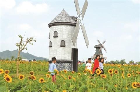 Bac Giang: un champ de fleurs de tournesols pour les fans de photos hinh anh 1
