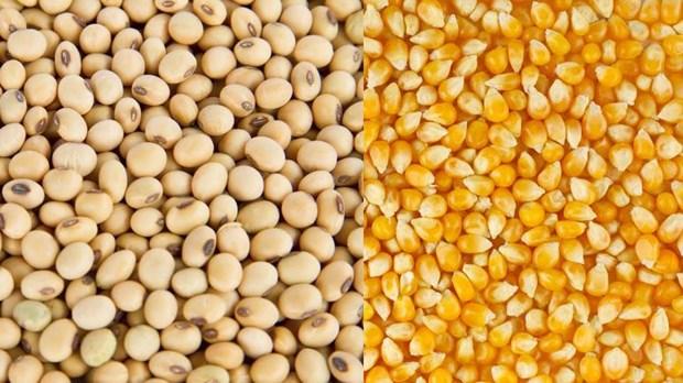 Matieres premieres de l'alimentation animale: l'Argentine, premier fournisseur du Vietnam hinh anh 1