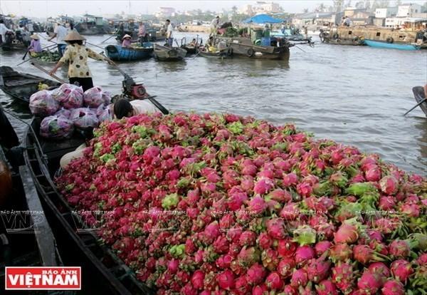 Developpement des produits touristiques typiques de la ville de Can Tho hinh anh 1